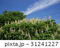 初夏 花 雲の写真 31241227