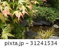 日本庭園 31241534