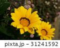 黄色い花 31241592