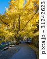 あき 秋 きれいの写真 31242623