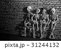Four skeletons standing and leaning on grungy wall 31244132