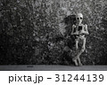 A skeleton leaning on a wall with smartphone 31244139