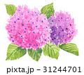 hydrangia17603pix7 31244701