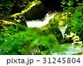 奥入瀬渓流 阿修羅の流れの苔むした岩 31245804