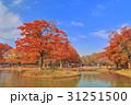 代々木公園 噴水池 紅葉の写真 31251500