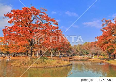 代々木公園 噴水池の紅葉 31251501