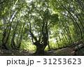 秋田県にかほ市 あがりこ大王(超広角撮影) 31253623