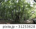秋田県にかほ市 あがりこ大王(超広角撮影) 31253628