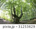 秋田県にかほ市 あがりこ大王(超広角撮影) 31253629