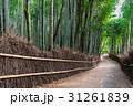 京都 嵯峨野 竹林の道の写真 31261839