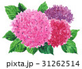 紫陽花17604pix7 31262514