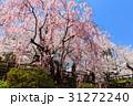 弘前城桜まつり_2017 31272240