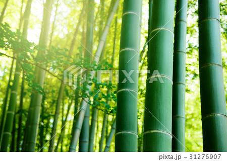 竹林 31276907