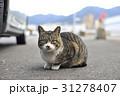 猫 31278407