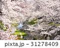 桜 31278409