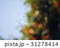 鳥 31278414