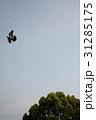 鳩と空と木 31285175