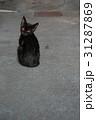黒猫 野良猫 31287869