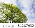 緑の木々と青空 31287932