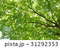 新緑 31292353