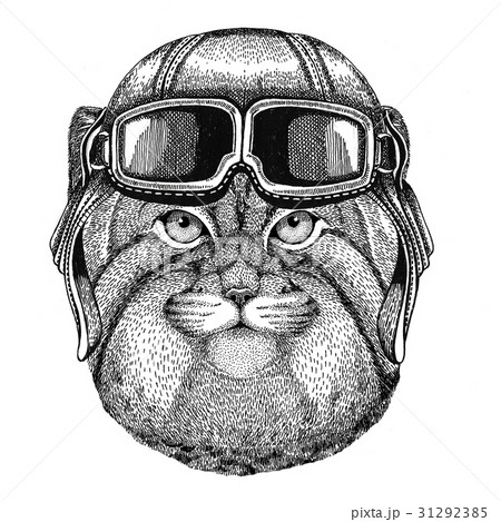 Wild cat Manul wearing leather helmet Aviator 31292385