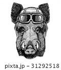 イノシシ 猪 野生のイラスト 31292518
