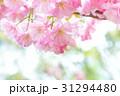 桜 サクラ 花の写真 31294480