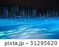美瑛 雪景色 青い池の写真 31295620