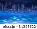 美瑛 雪景色 青い池の写真 31295622