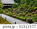東福寺 開山堂のサツキ 31311577