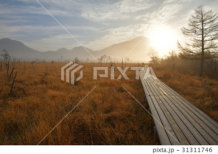 秋の戦場ヶ原 男体山から昇る太陽と木道 31311746