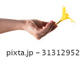 yellow lily flower in a female hand 31312952
