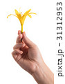 yellow lily flower in a female hand 31312953