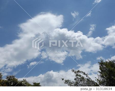 谷津干潟公園の青い空と白い雲 31318634