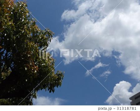 谷津干潟公園の青い空と白い雲 31318781