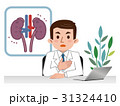 腎臓の説明をする医師 病気 31324410