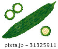 手書き 野菜 ゴーヤのイラスト 31325911