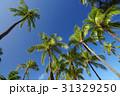 椰子 ヤシ 椰子の木の写真 31329250