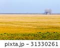 農業 農耕 バックグラウンドの写真 31330261