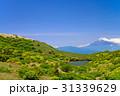 伊豆スカイライン 富士山 風景の写真 31339629