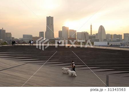 大桟橋を散歩する大型の白い犬 31343563