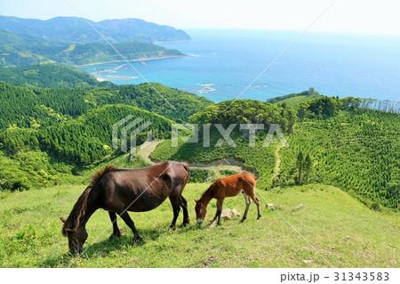 宮崎県 大自然と馬 31343583