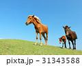 青空 馬 宮崎の写真 31343588