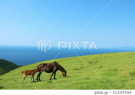 海と青空と馬の親子 31343594