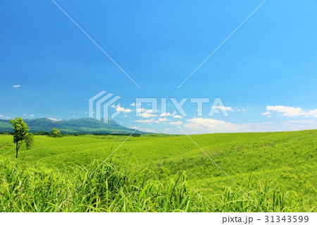 青空と広大な高原の風景 31343599