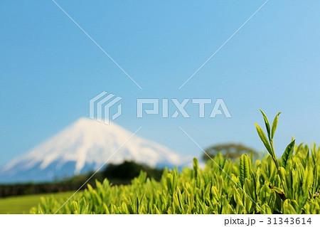 青空の富士山と新緑の茶畑 31343614