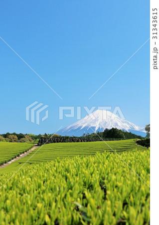 富士山と新緑の茶畑 31343615