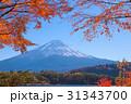 紅葉 富士山 山の写真 31343700