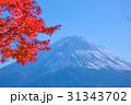 河口湖の紅葉と富士山 31343702