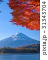 河口湖の紅葉と富士山 31343704